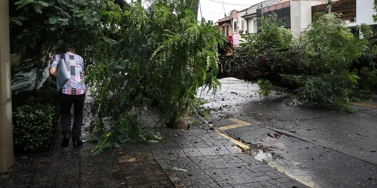 São Paulo teve 411 quedas de árvores em menos de 24 horas