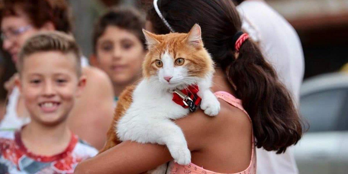 Una niña de 6 años casi pierde la vida por un mordisco de su gato