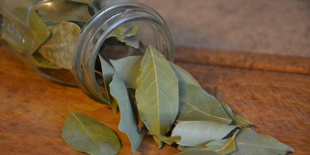 Estes são os 7 benefícios medicinais da folha de louro para a saúde