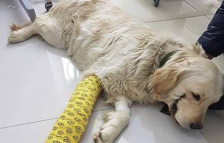 """Maltrato animal: Sujeto le cortó la boca a su perro porque quería que se pareciera a """"El Guasón"""""""