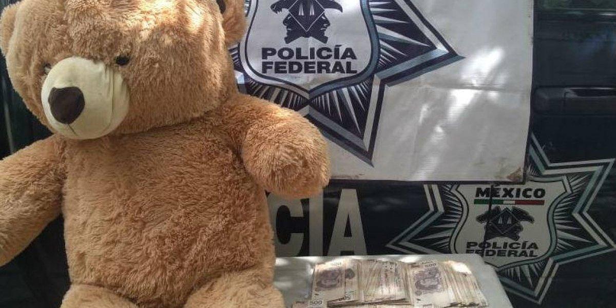 Perro policía 'caza' a oso de peluche con 200 mil pesos en su interior