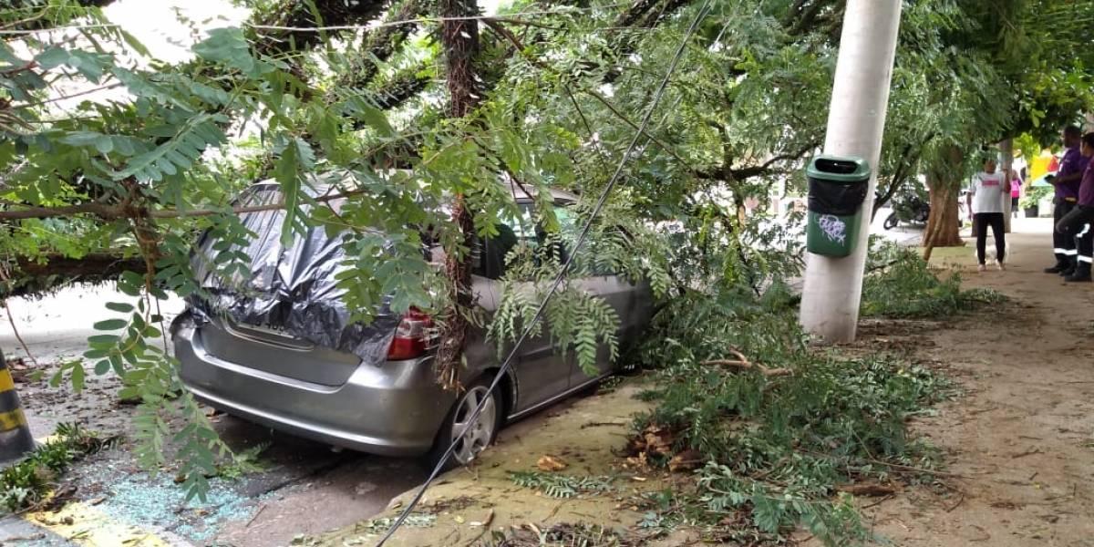 Prefeitura de SP estuda acionar Enel na Justiça por dificuldades na retirada de árvores caídas