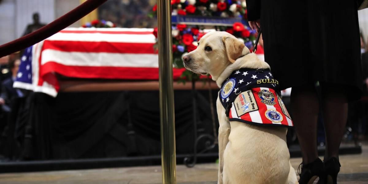 Sully: el perro del fallecido George Bush se estrena en su nuevo empleo