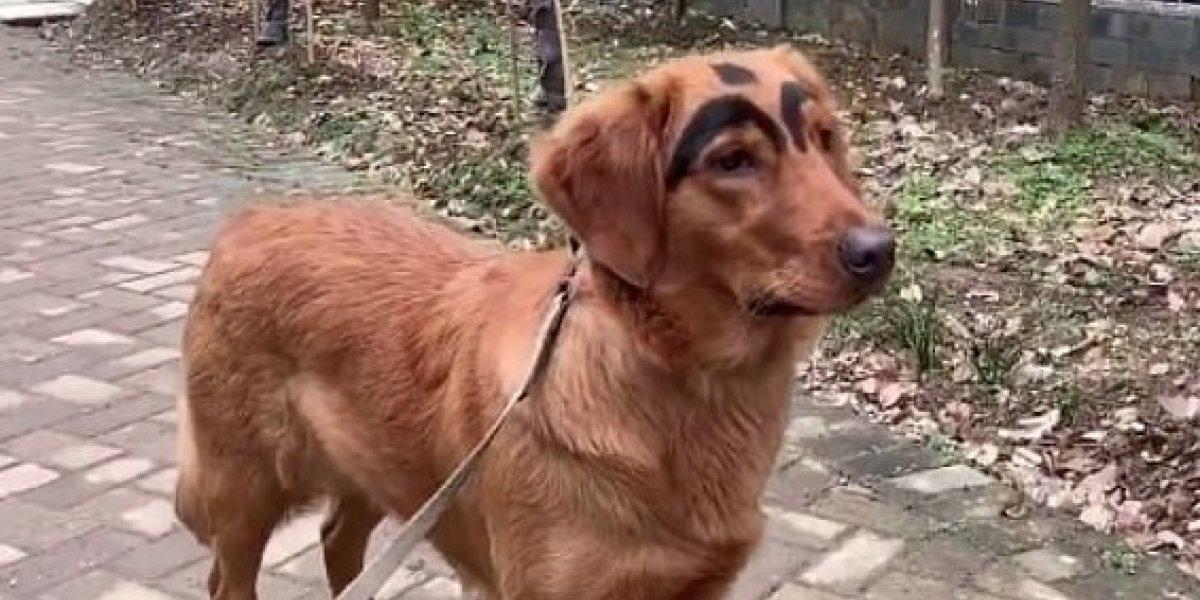 Quiso mejorar a su perro para hacerlo más adorable: mujer le pintó cejas a su cachorro y abrió fuerte debate sobre maltrato animal