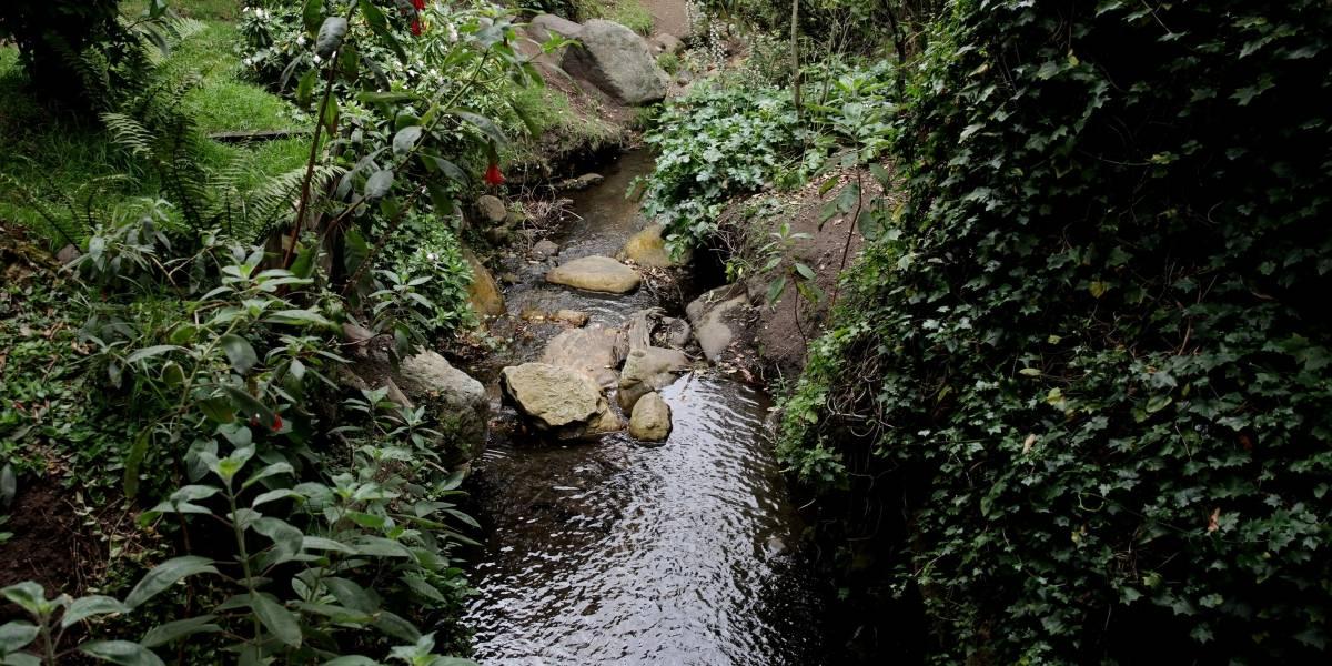 Colombia se suma al acuerdo de Escazú, por la protección del ambiente