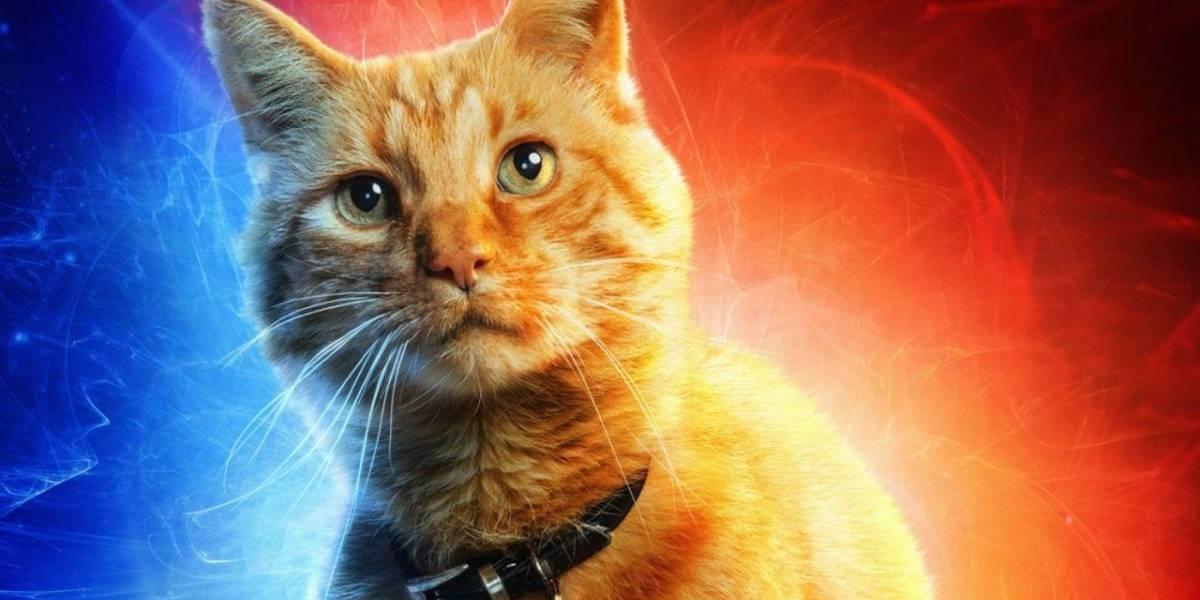 Capitã Marvel: Em menos de 24 horas, campanha da Marvel para Instituto Luisa Mell bate dobro da meta