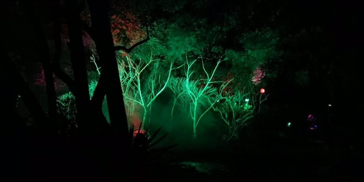 Quito ya tiene su 'Bosque de Luz'