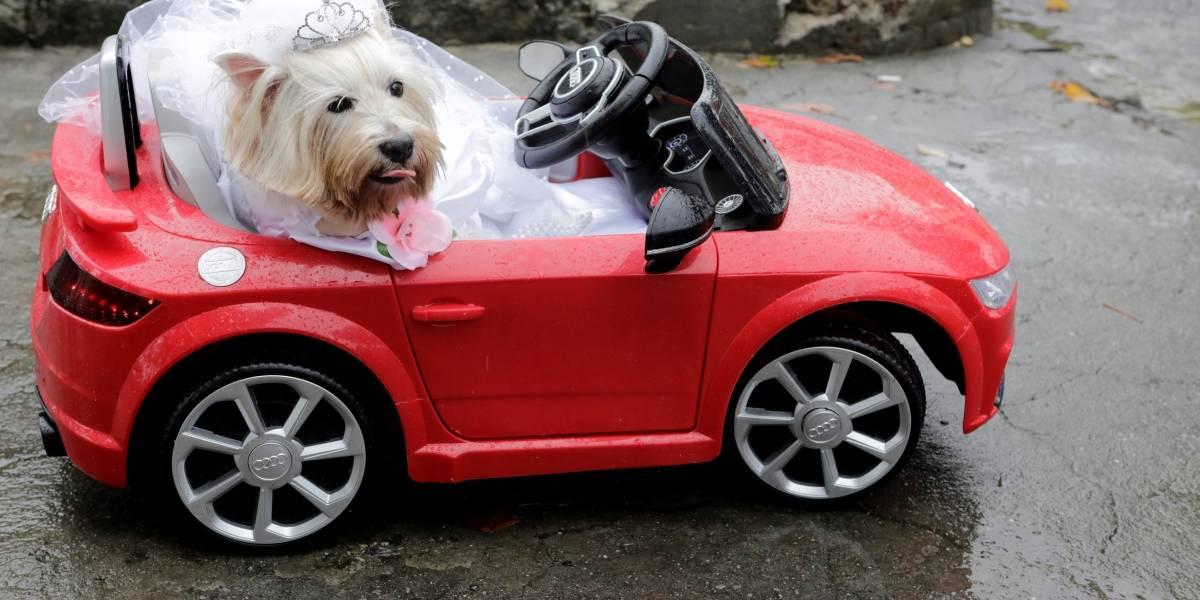 Blocão sai às ruas com os animais de estimação; veja fotos