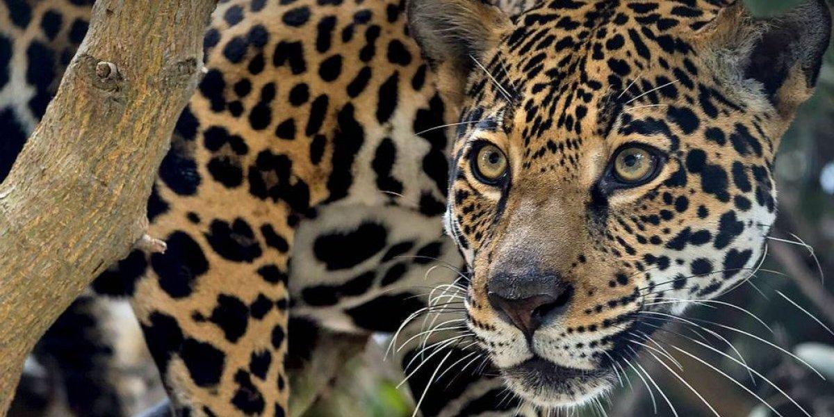 Actividad humana amenaza a 30% de la vida silvestre del planeta