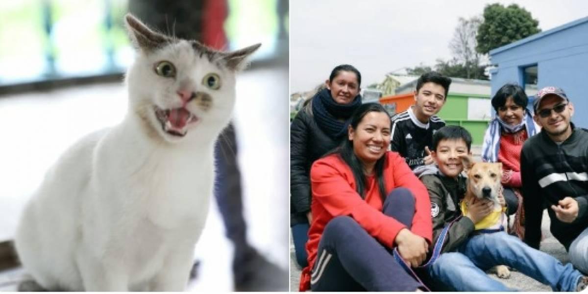 Perros y gatos encontraron hogar en la primera gran jornada de adopción del año en Bogotá