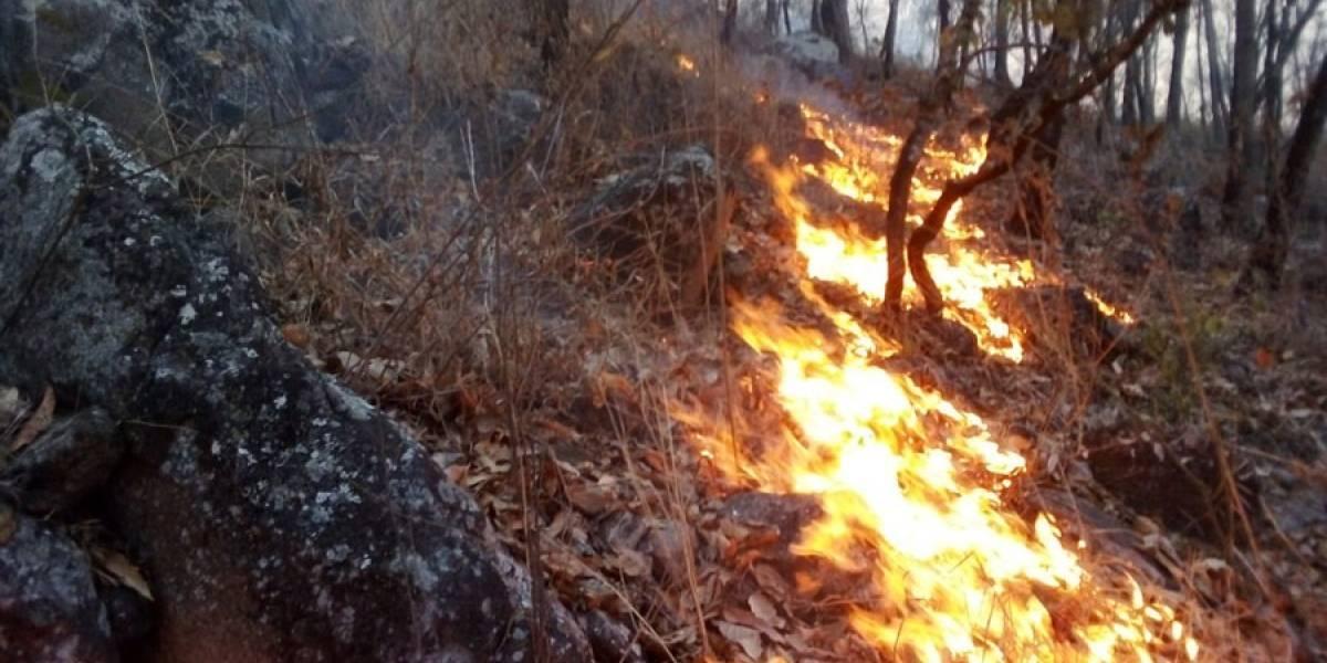 Autoridades combaten 25 incendios forestales activos