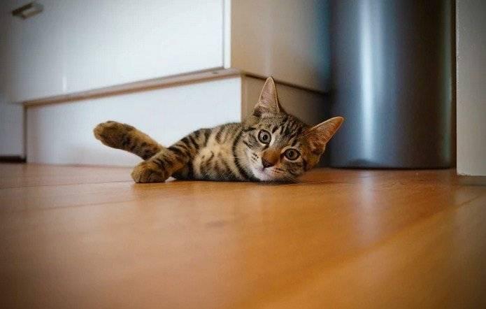 sido otra. Todo lo que necesitas saber sobre el sida en gatos