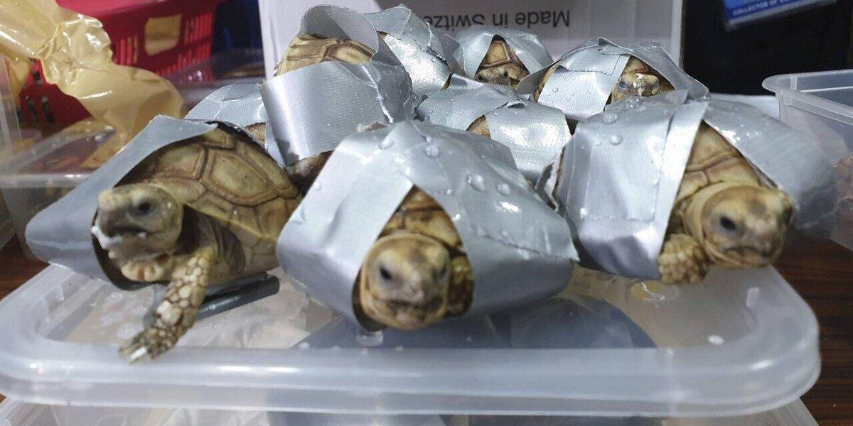Hallan más de mil 500 tortugas dentro de equipaje en Filipinas