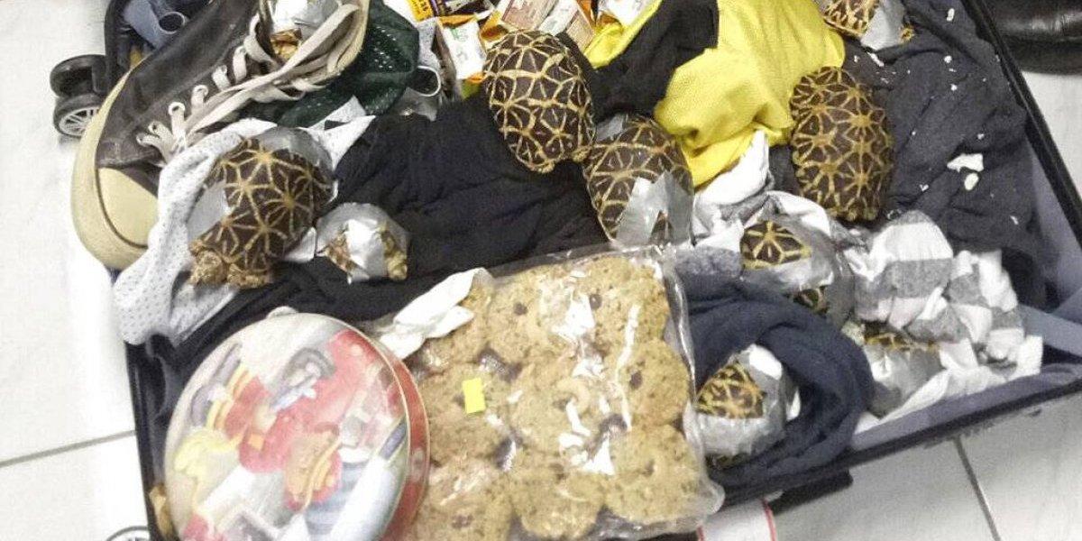 Encuentran más de mil tortugas dentro de maletas en Filipinas