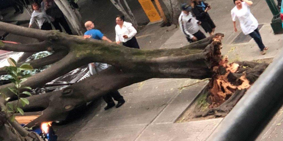 Fuerte viento derriba árboles, ramas y espectaculares en la CDMX