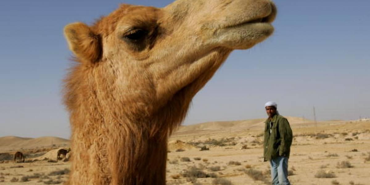 Un fiel compañero: Camello deprimido se niega a comer o beber agua luego que el oficial de policía que lo montaba muriera de un infarto