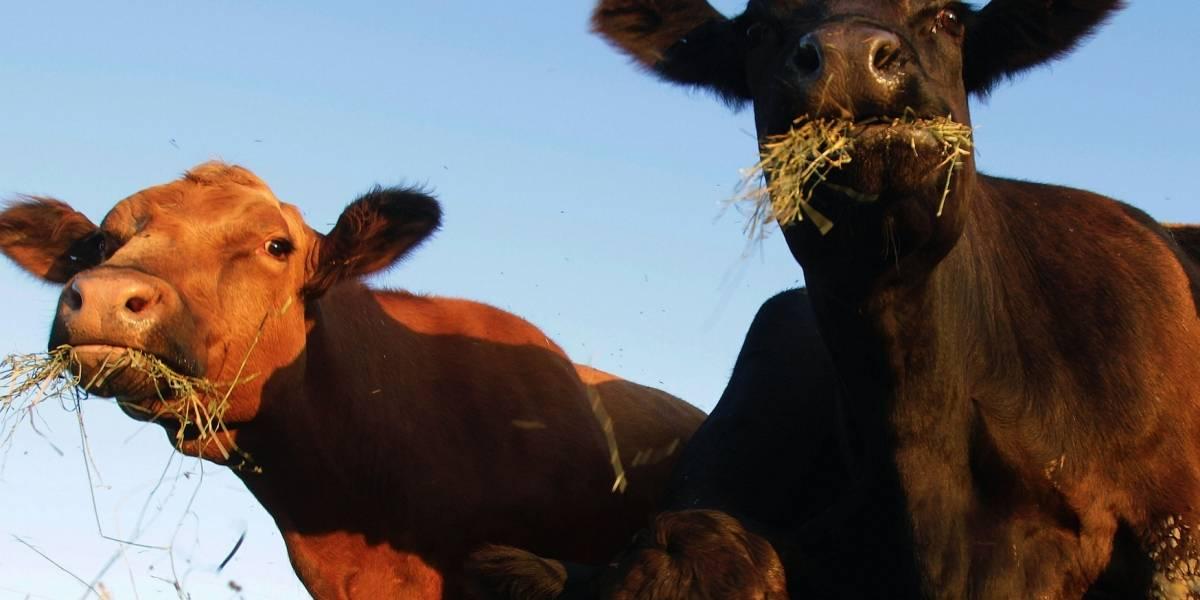 EEUU: Delinean supervisión de carne de laboratorio
