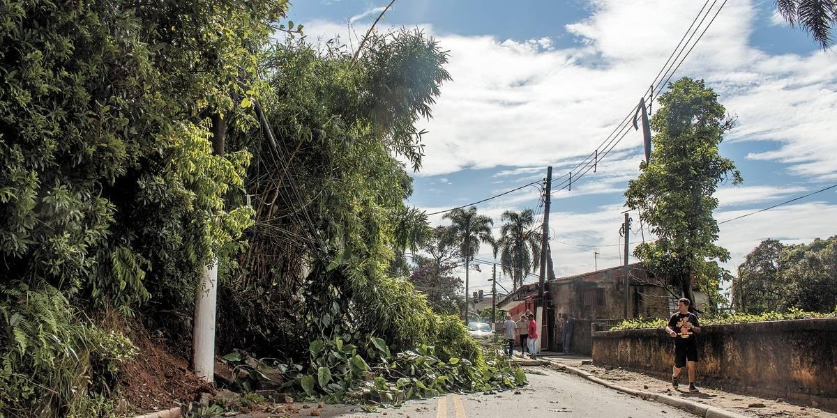 Em dois meses, 2.497 árvores foram ao chão em São Paulo