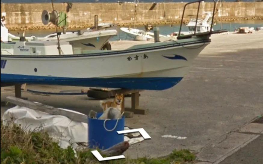 Un adorable perro se hizo famoso después de perseguir al vehículo de Google y aparecer en Street View