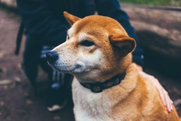Resultado de imagen para google perro