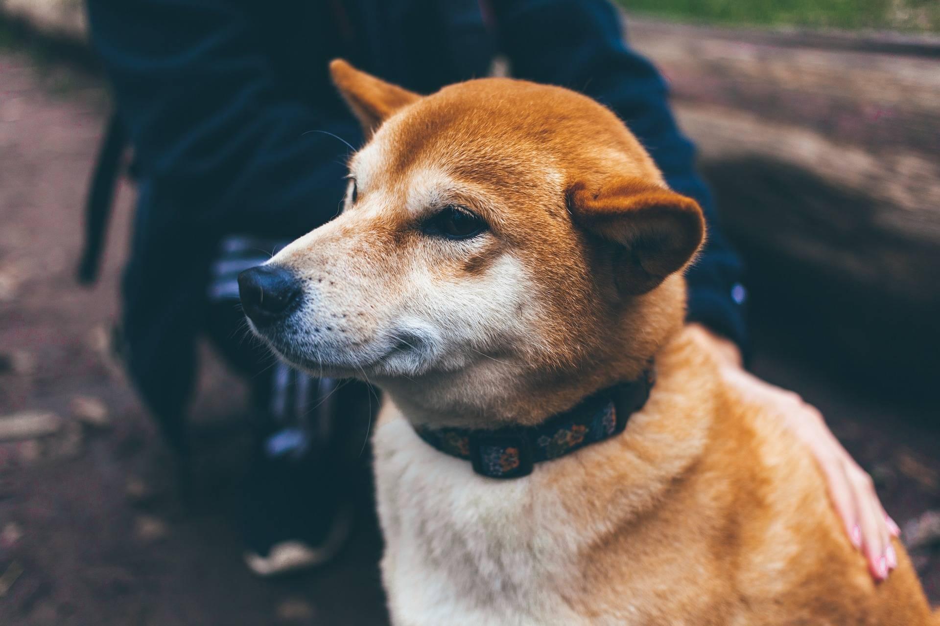 ¿Perros o gatos? estudio asegura que caninos son más queridos por los humanos