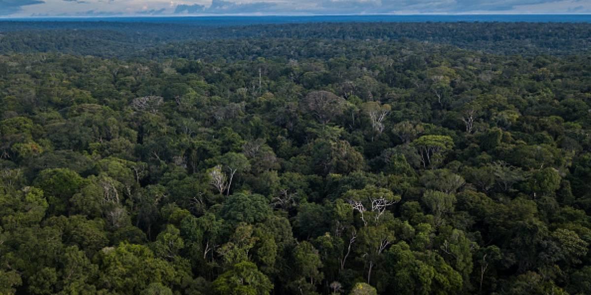 Bombas químicas, asesinatos y casi 8 mil muertos: el crudo testimonio de la tribu amazónica que acusa las atrocidades del ejército en Brasil
