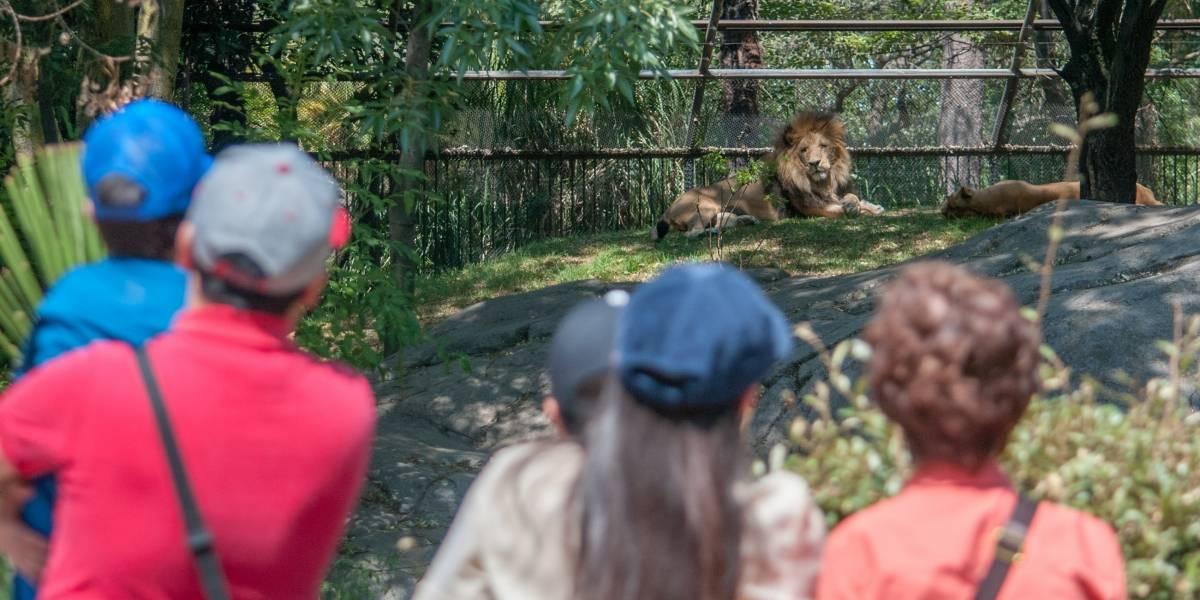 Jumanji, se esfuman de zoológicos de CDMX sin dejar rastro alguno