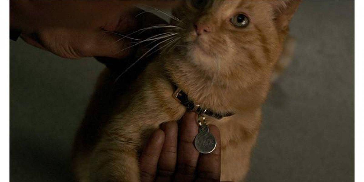 ¿Por qué es tan peligroso Goose, el gato de Capitana Marvel?