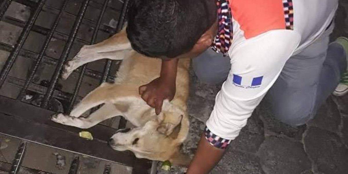 Denuncian matanza de perros por envenenamiento en San Pedro La Laguna