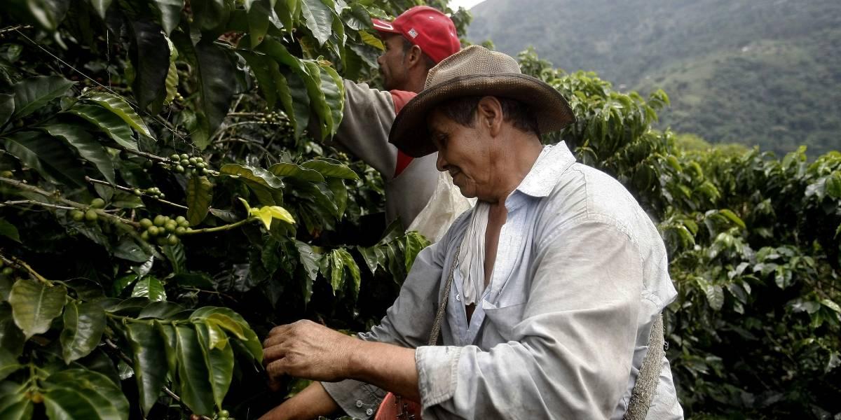 Desean apoyar a caficultores guatemaltecos a obtener cosechas sanas y prósperas