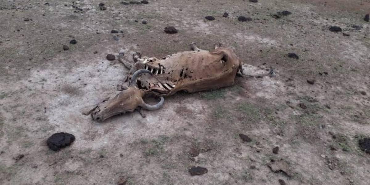 Las tétricas fotos de la mortandad de animales en los llanos
