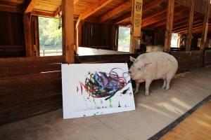 Porca pintora Pigcasso