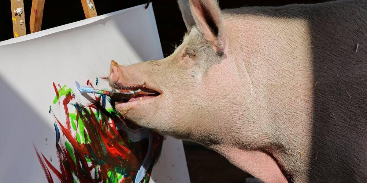 'Pigcasso': Porca pintora faz sucesso na África do Sul; veja fotos