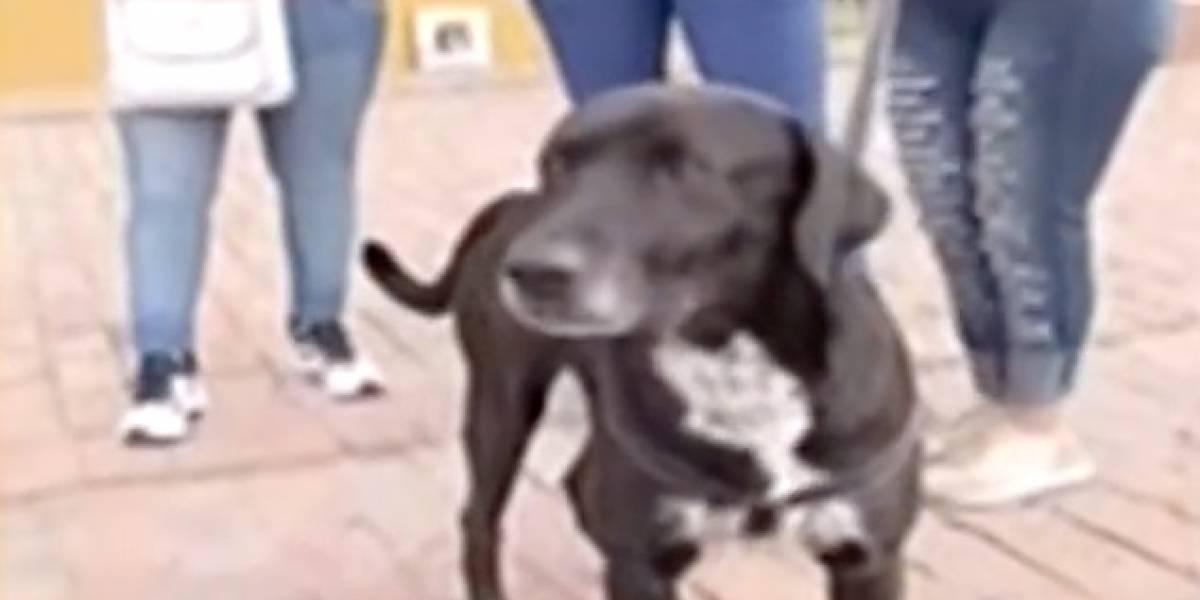 VIDEO: despiadado hombre abandona a su perrito en Bogotá