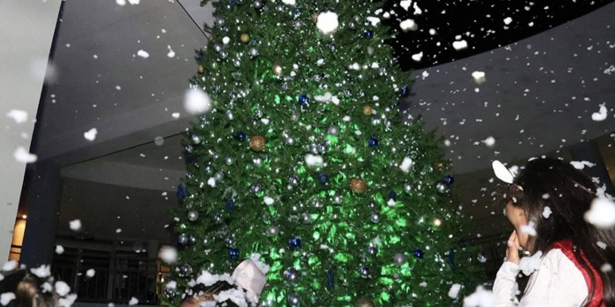 Gobierno municipal de SLP gastó 1.5 mdp en árbol de Navidad