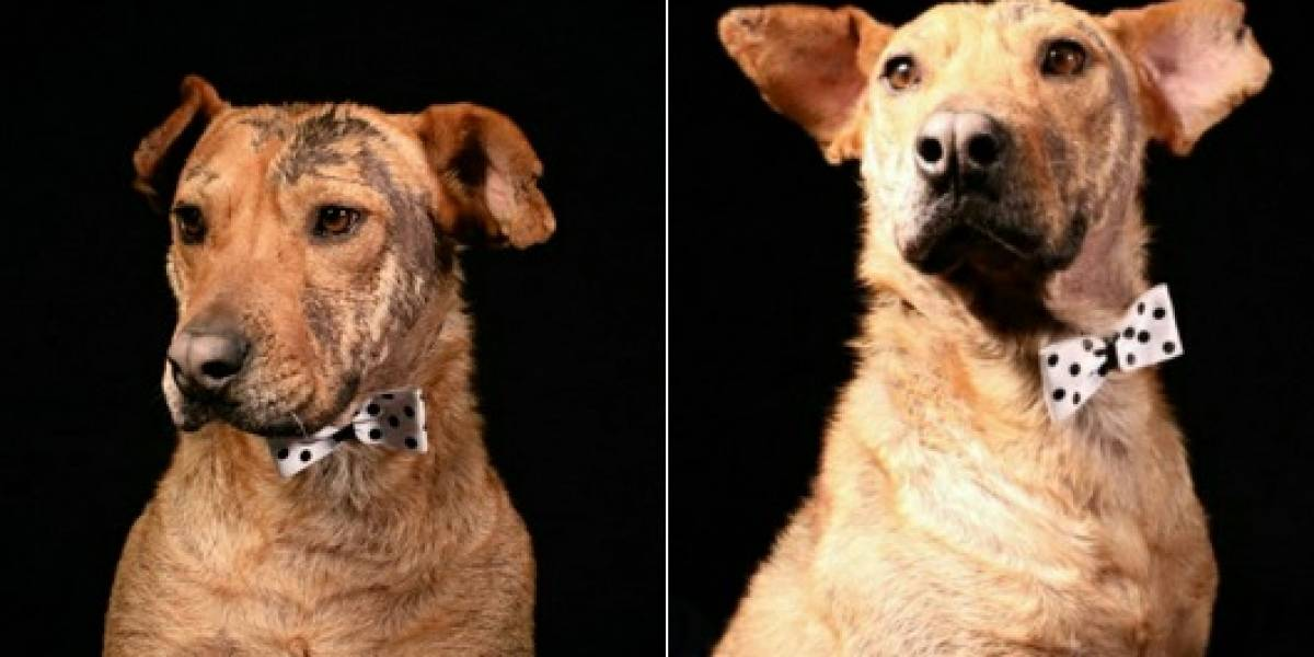 Conozca la historia de Serafín, el perro que nadie ha querido adoptar en Bogotá