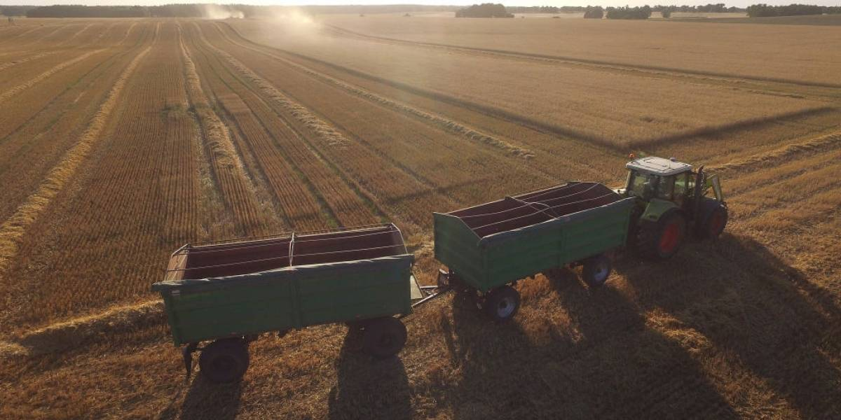 Chile y su producción de trigo caerán un 52% a 2040 por grave sequía según estudio