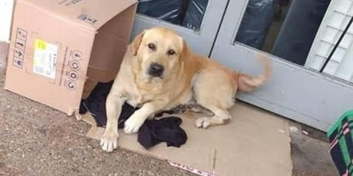 Cão é esquecido em hospital e passa uma semana esperando dono que faleceu