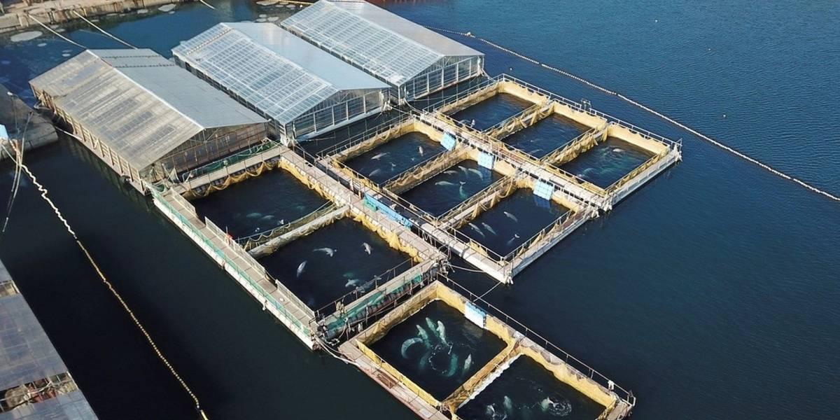La cárcel de ballenas más grande del mundo es un grave problema de imagen para Vladímir Putin
