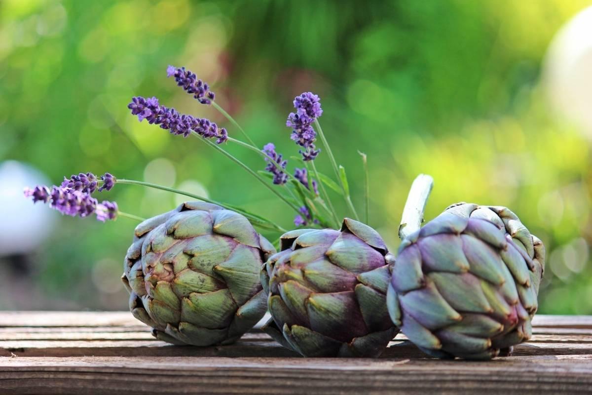 Botellitas de alcachofa para adelgazar