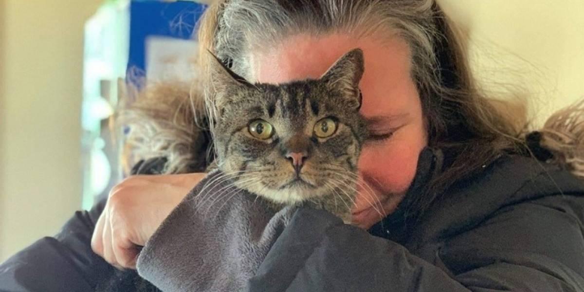 """""""No lo dejaré ir nunca más"""": gatito regresa a su hogar tras cinco años perdido y da la mayor alegría de su vida a su dueña"""