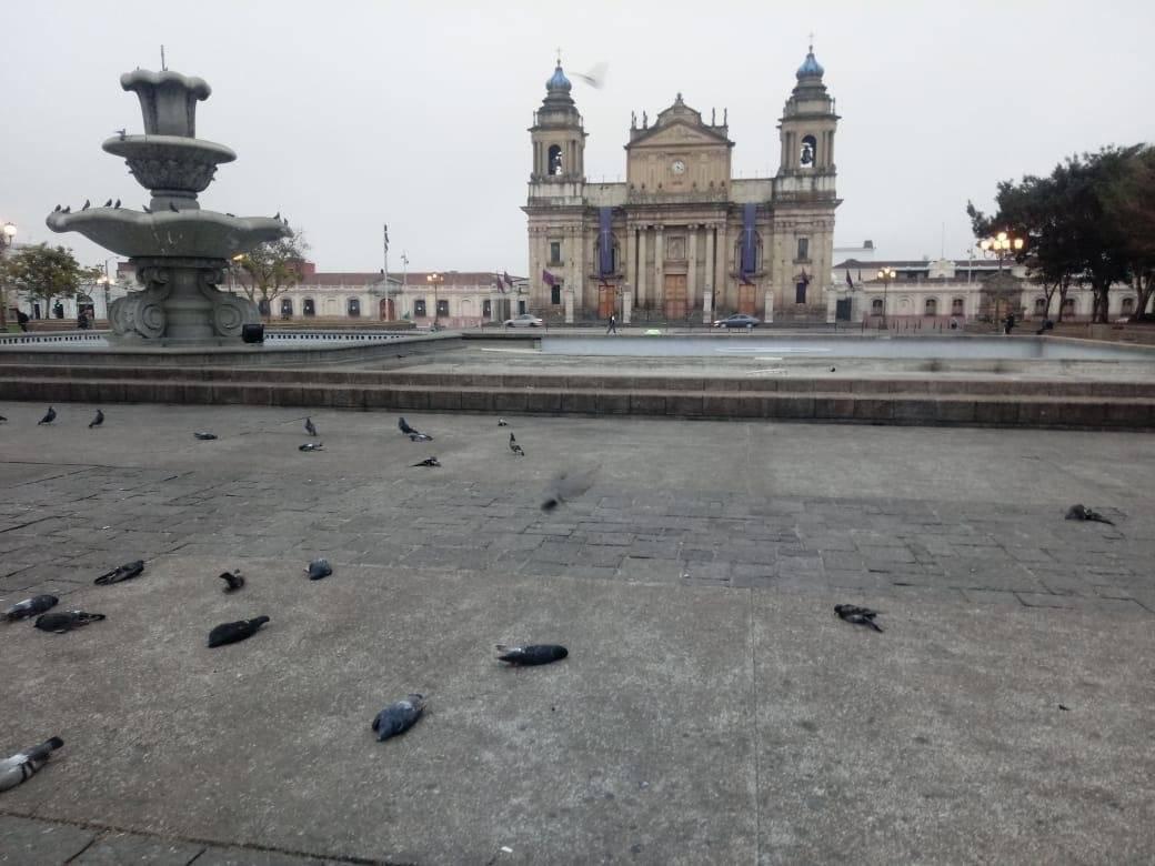 Investigarán si palomas fueron envenenadas. Municipalidad de Guatemala
