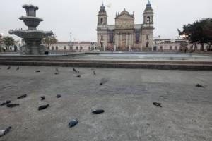 Investigarán si palomas fueron envenenadas.