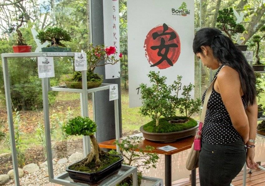 Exposición de Bonsái del Jardín Botánico de Bogotá Prográmese para la exposición de Bonsái del Jardín Botánico de Bogotá