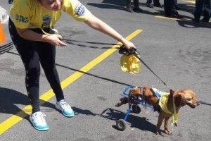 """Cientos de mixqueños corrieron con sus mascotas por una """"Ambucan"""""""