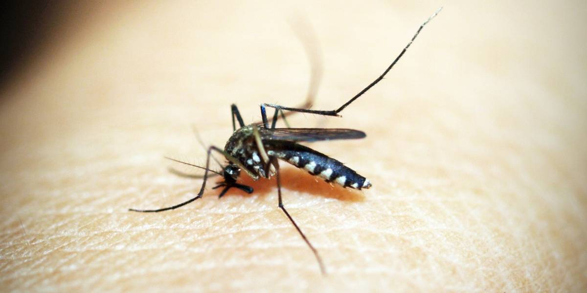 Un descubrimiento reciente sobre el dengue abre la posibilidad de controlar la enfermedad en un futuro