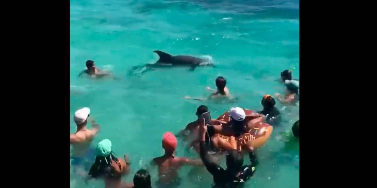 Delfines compartieron con humanos en Icacos