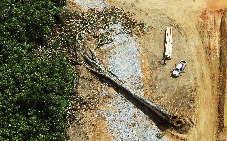 Colombia: La Amazonía concentra gran parte de la deforestación de todo el país