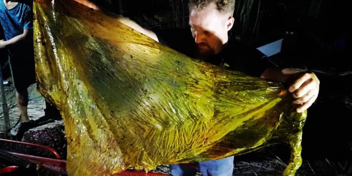 """""""Es asqueroso"""": biólogos marinos encontraron una ballena muerta y en su estómago había 40 kilos de bolsas plásticas"""