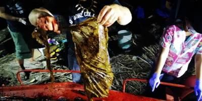 Ballena hallada muerte con 40 kilos de plástico en el estómago